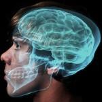 Коды мозга (Константин Анохин)
