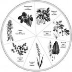 Книга Светлены — «Растения-красители в народном быту»