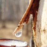 Березовый сок: плачет русская берёзка