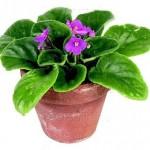 Растения и травы. Соответствия в настройках для магических ритуалов