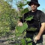 Природный «аспирин» в лесу