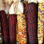 Сионисты создали кукурузу против зачатия детей ещё в 2001