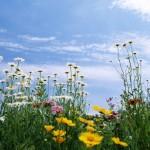 Собираем травы правильно