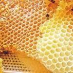 Применение пчелиного воска в народной медицине