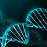 Каким ключом открывается ДНК?