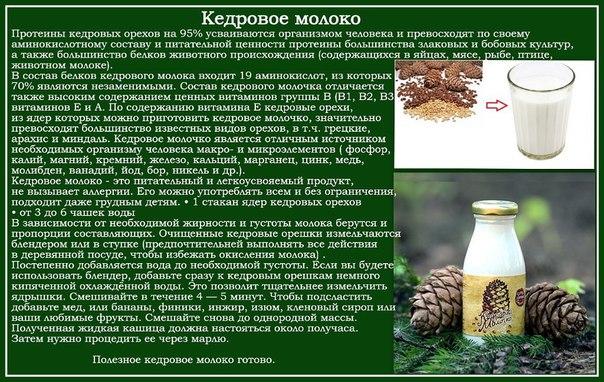 рецепт кедрового молока