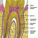Как я вырастил новые зубы. Михаил Столбов
