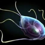Страшная правда о паразитах в теле человека. Захар Белинский