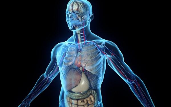 Почему органы человека болеют попарно?