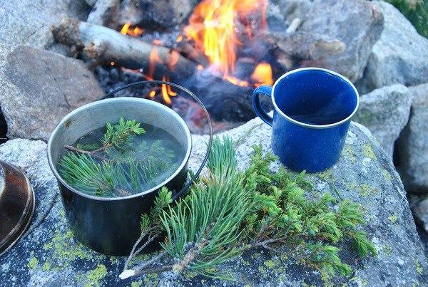 Полезные свойства хвойного чая. Народная медицина